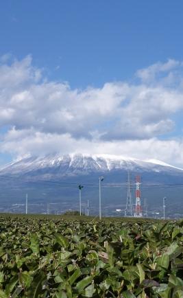Mont Fuji pris dans les champs de thé